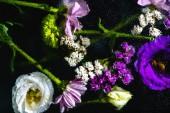 pohled shora na mokré růžové, modré a bílé květy na černém pozadí
