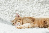 cute domestic ginger cat resting on white soft carpet in living room