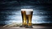 čerstvé pivo v brýlích a pšeničné klásky na dřevěný stůl, oktoberfest koncepce