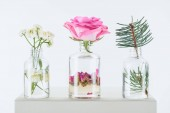 Fotografie transparent bottles of natural herbal essential oils with chamomile flowers, roses and fir twig on white cube