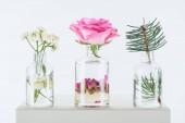 bottiglie trasparenti di oli essenziali naturali a base di erbe con fiori di camomilla, Rose e ramoscello di abete il cubo bianco