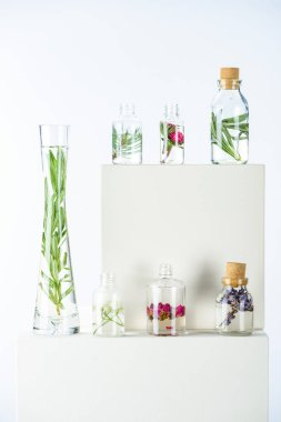 vase and bottles of natural herbal essential oils with flowers and herbs on white cubes