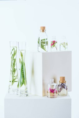 bottles and vases of natural herbal essential oils with herbs and flowers on white cubes