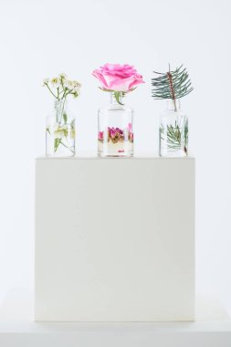 Three bottles of natural herbal essential oils with chamomile flowers, roses and fir twig on white cube stock vector
