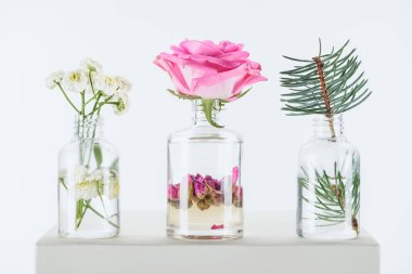 transparent bottles of natural herbal essential oils with chamomile flowers, roses and fir twig on white cube
