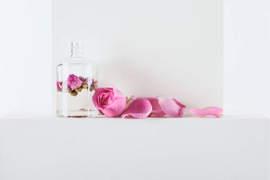 transparent bottle of natural herbal essential oil with pink roses on white surface