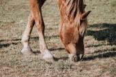 Fotografia Chiuda sulla vista di bello cavallo marrone che pascono sul prato in campagna