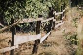 Fotografie Selektivní fokus zelených listů a dřevěný plot na louce v krajině