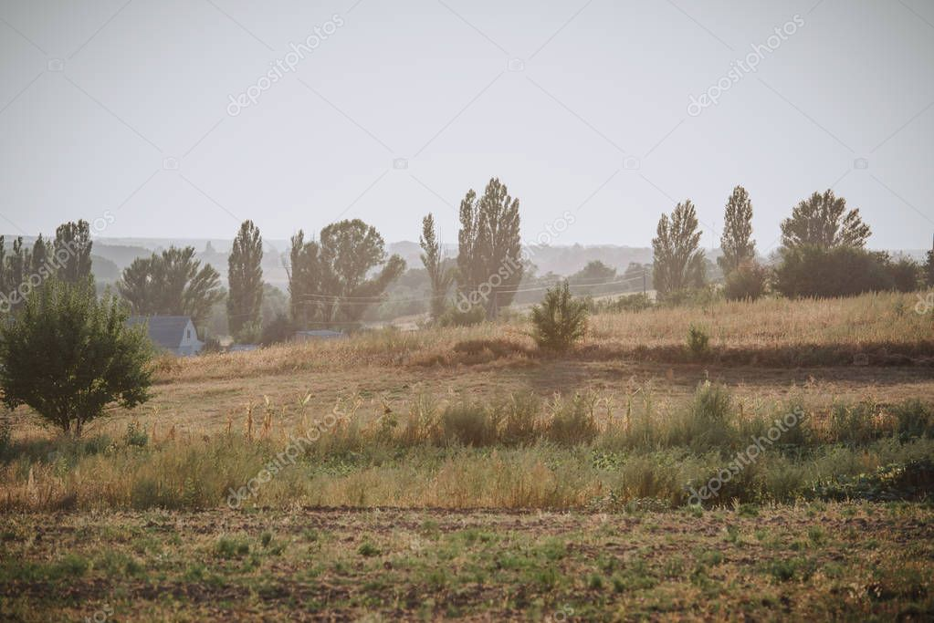 rural scene with meadow and trees in countryside