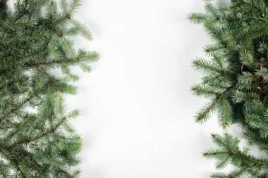 Top view of beautiful evergreen fir twigs on white background stock vector