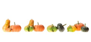 panoramic view or ripe autumnal pumpkins isolated on white