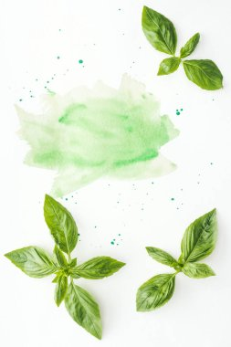 Top view of uncooked basil leaves on white surface with green watercolor strokes and blots stock vector