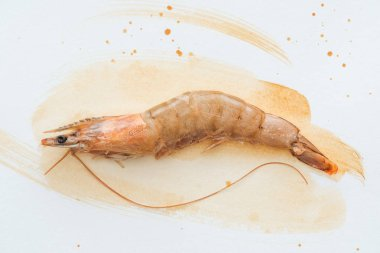 top view of single raw shrimp on white surface with watercolor strokes