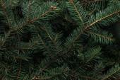 teljes képkocka a zöld fenyő fa ágai, mint háttér