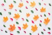 verschiedene Blätter isoliert auf weißem, herbstlichem Hintergrund
