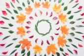 lay flat di cerchi di foglie colorate, isolati su sfondo bianco, autunno