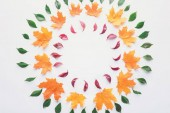 flat lay of circles of burgundy, green and orange leaves isolated on white