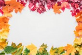 top view of colored frame of maple leaves isolated on white, autumn background