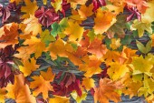 top view of autumnal colored leaves on wooden grey surface