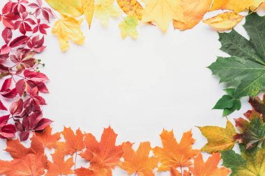Top view of frame of autumnal leaves isolated on white stock vector