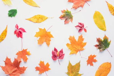 Top view of scattered autumnal leaves isolated on white stock vector