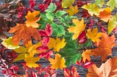 elevated view of scattered colored autumnal maple leaves on wooden grey surface