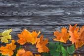 Fotografie pohled shora oranžové a zelené podzimní javorové listy na dřevěný povrch
