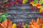 top view of frame of autumnal different leaves on wooden surface