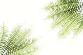 elevated view of arranged green fern branches isolated on white