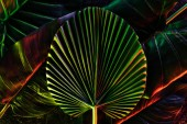 Fotografie toned picture of various tropical leaves with red lighting