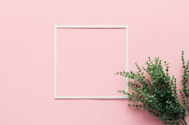 top view of white square and green plant on pink, minimalistic concept