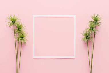 top view of white frame between green plants on pink