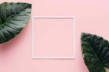 top view of white square and palm leaves on pink, minimalistic concept
