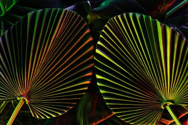toned picture of beautiful tropical leaves with colorful lighting
