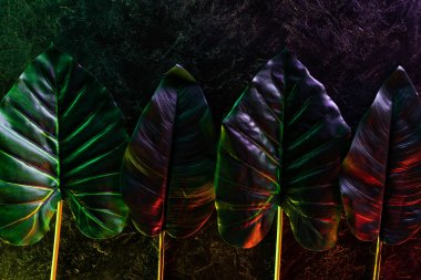 elevated view of tropical leaves placed in row with red and purple lighting