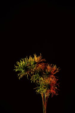 colored picture of beautiful plant with red lighting isolated on black