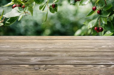 template of brown wooden floor with cherry tree on blurred green background