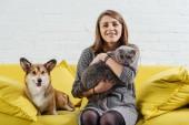 attraktive Frau sitzt auf Sofa mit lustigem pembroke walisischen Corgi und niedlicher schottischer Faltkatze