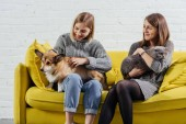 young women sitting on sofa and holding adorable pembroke welsh corgi with scottish fold cat
