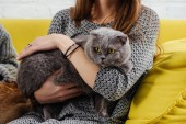 Fotografie cropped view of girl holding  adorable scottish fold cat