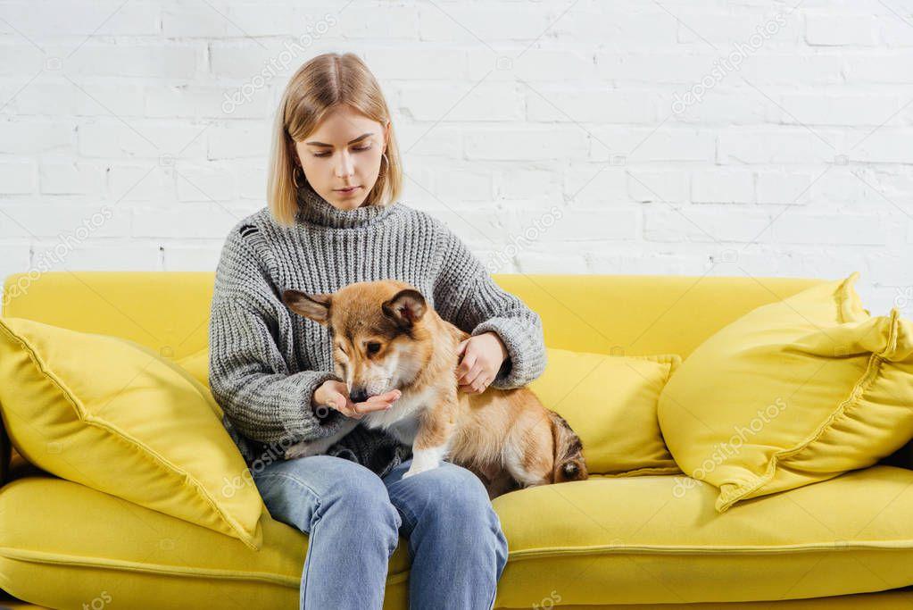 Beautiful woman sitting on sofa and giving treat cute pembroke welsh corgi dog