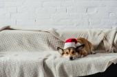 roztomilý welsh corgi pes v santa hat leží na pohovce a při pohledu na fotoaparát