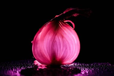 slice of raw onion with water drops and neon pink back light on black background