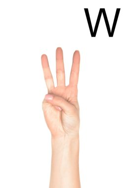 Partial view of female hand showing latin letter - W, deaf and dumb language, isolated on white stock vector