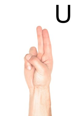 cropped view of male hand showing latin letter - U, deaf and dumb language, isolated on white