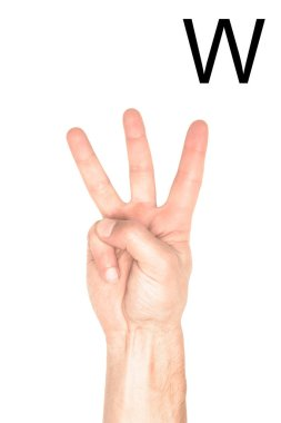 Partial view of male hand showing latin letter - W, deaf and dumb language, isolated on white stock vector