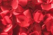 Bello cuore rosso decorativo a forma di petali, giorno di San Valentino sfondo