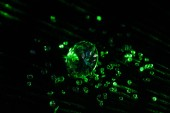 Fotografie sbírku diamantů s jasně zelená neon světlo na tmavém pozadí