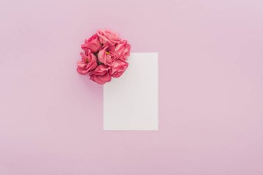 Top view of flowers and blank card isolated on pink stock vector