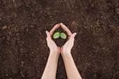 oříznutý pohled ženy držící zemi s zelených rostlin v rukou, ochrana přírody koncept